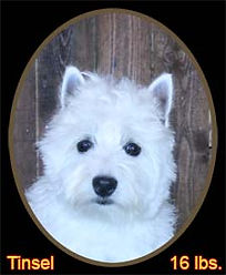 Tinsel Portrait Web.jpg