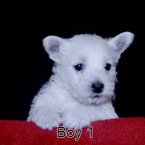 1-19-21 Luna Boy 1.JPG