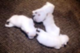 9-28-18 Emerald Pups.jpg