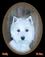 Holly Portrait Web.jpg