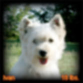 Ivan Portrait Web.jpg