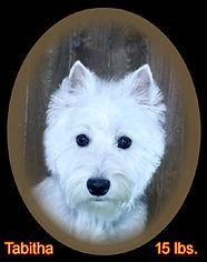 Tabitha Portrait Web.jpg