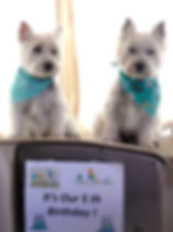 5th Birthday Westies Twins