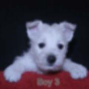 3-23-20 Tabitha Boy 3.JPG