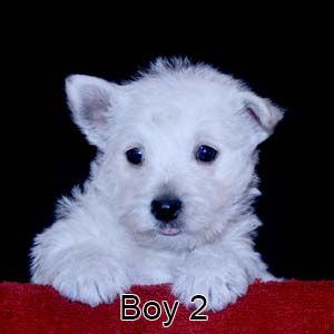 2-24-21 Tinsel Boy 2.JPG