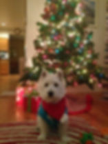 Christmas Westie Jackson Sweater
