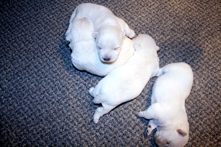 2-27-19 Saphire Pups.JPG