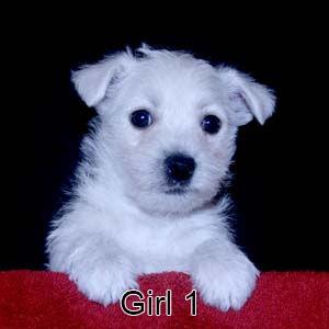 6-9-20 Chantilly Girl 1.JPG