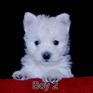 9-23-21 Tabitha Boy 2.JPG