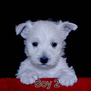 2-17-21 Bow Boy 2.JPG