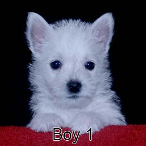 6-29-21 Chantilly Boy 1.JPG