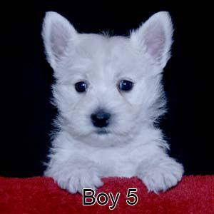 3-23-21 Tabitha Boy 5.JPG