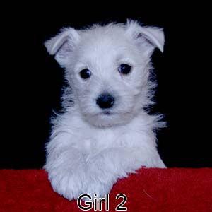 2-17-21 Bow Girl 2.JPG