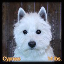 Cypress Portrait  Web.jpg