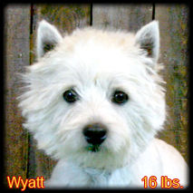 Wyatt Portrait Web.jpg