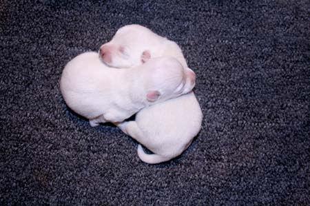 4-8-20 Sapphire Pups.JPG
