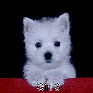 9-8-21 Tinsel Girl 3.JPG
