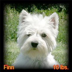 Finn Portrait Web.jpg