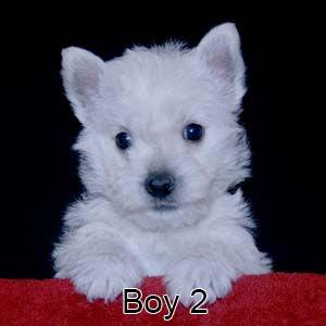 12-29-20 Chantilly Boy 2.JPG