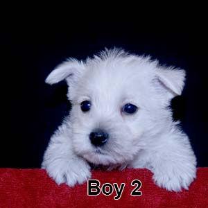 3-10-20 Leia Boy 2.JPG