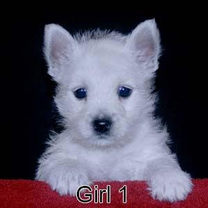 9-8-21 Tinsel Girl 1.JPG