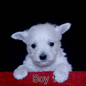 2-17-21 Bow Boy 1.JPG
