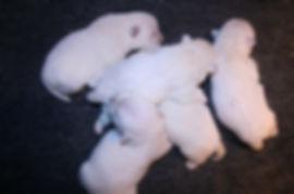 8-14-19 Cashmere Pups.JPG