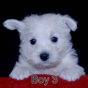 7-7-21 Luna Boy 3.JPG