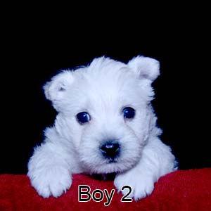 11-28-20 Rhapsody Boy 2.JPG