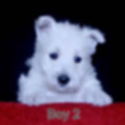5-18-20 Holly Boy 2.JPG