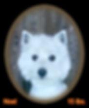 Noel Portrait Web.jpg