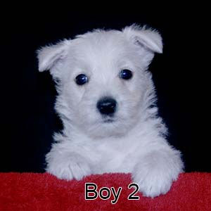 6-9-20 Chantilly Boy 2.JPG
