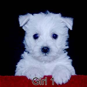 6-4-21 Sapphire Girl 1.JPG