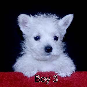 9-19-20 Tabitha Boy 3.JPG