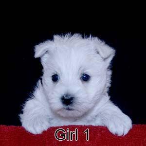 2-24-21 Ribbon Girl 1.JPG