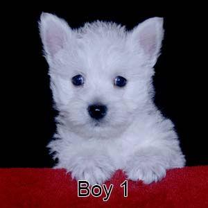 9-8-21 Tinsel Boy 1.JPG