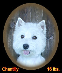 Chantilly Portrait Web.jpg