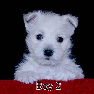 1-15-21 Jasmine Boy 2.JPG