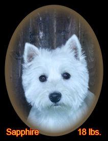 Sapphire Portrait Web.jpg