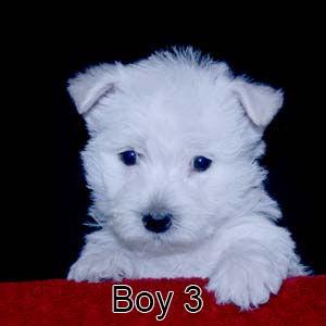 6-4-21 Sapphire Boy 3.JPG