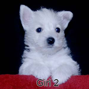 6-9-20 Chantilly Girl 2.JPG