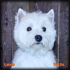 Lando Portrait Web.jpg