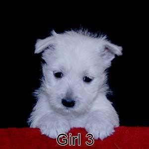 2-17-21 Bow Girl 3.JPG
