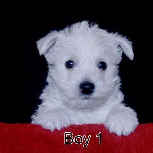 6-9-20 Chantilly Boy 1.JPG