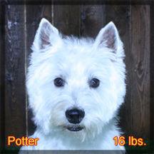 Potter Portrait Web.jpg