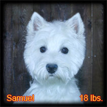 Samuel Portrait Web.jpg