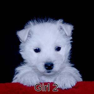 4-22-21 Cashmere Girl 2.JPG