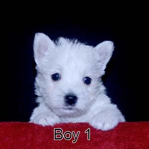 7-21-20 Luna Boy 1.JPG