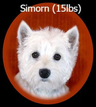 Simorn Portrait Web_edited.jpg
