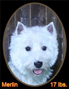 Merlin Portrait Web.jpg